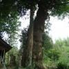 【その4】麓神社&千躰地蔵 14th Sept, 2013