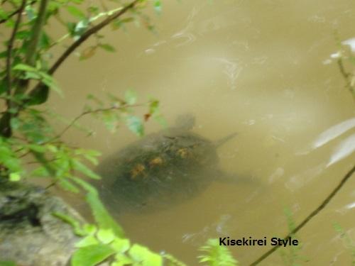 201209御池