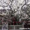飛梅が美しい太宰府天満宮に行ってきた 18th Feb, 2014