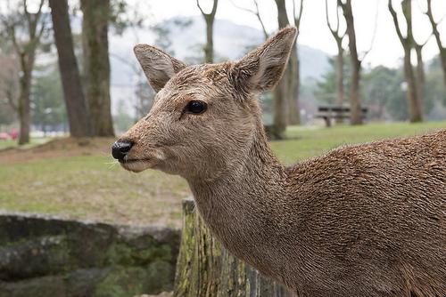 奈良駅周辺宿泊でも、朝拝や朝のお勤めに参加出来る神社仏閣