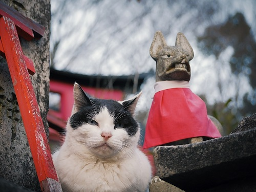 神社仏閣で出会った猫の画像をまとめてみたよ
