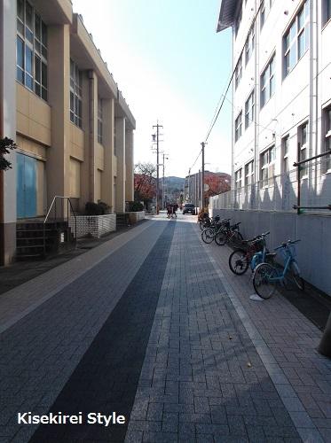 201411神路通り1