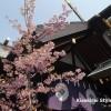 恋する乙女は東京大神宮を目指す~東京大神宮へ行ってきた