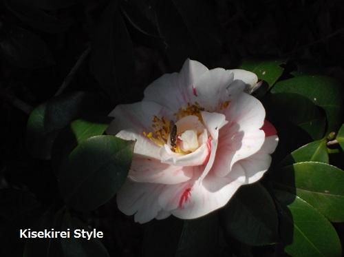 筑土八幡神社23