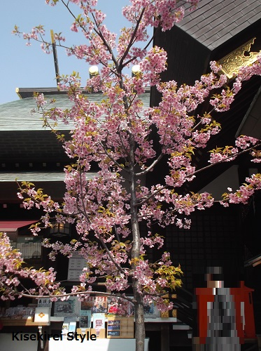 東京大神宮15