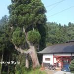 武蔵御嶽神社の日供祭に参列した