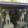 松江に行ったら是非!~堀川めぐりと城山稲荷神社