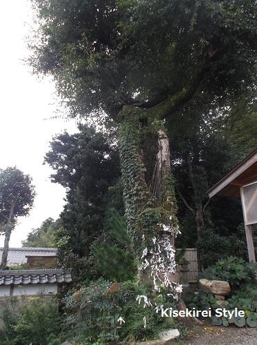 佐太神社14