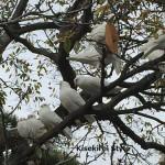 幸せの白い鳩~鶴岡八幡宮へ行ってきた【その3】