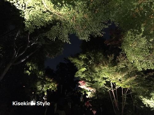 長谷寺鎌倉夜間5