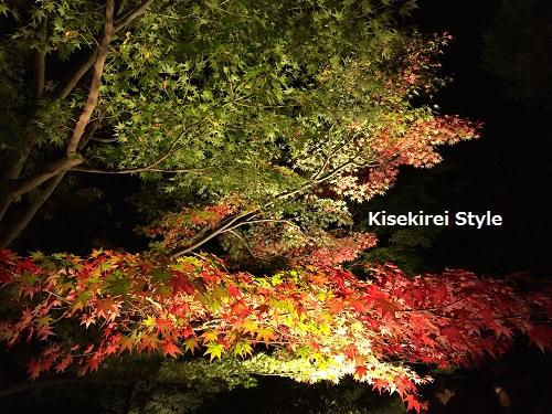 長谷寺鎌倉夜間21