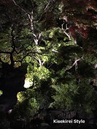 長谷寺鎌倉夜間30