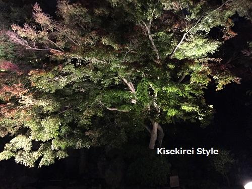 長谷寺鎌倉夜間23