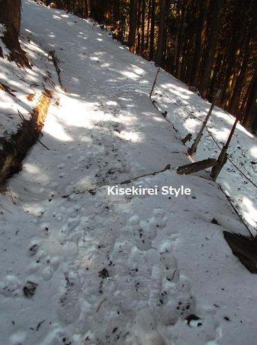 身延山ハイキング東コース12