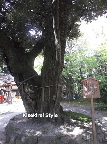 上賀茂神社(賀茂別雷神社)45