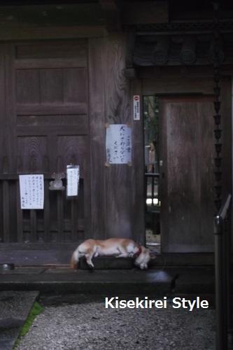201606奈良長谷寺52