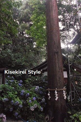 201606鴨都波神社20
