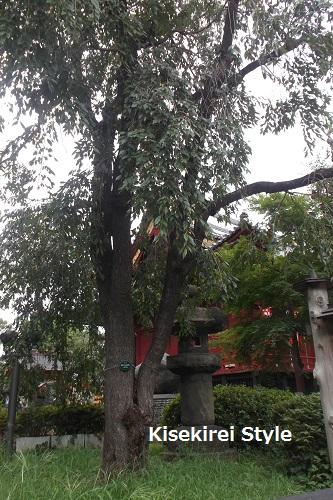 寛永寺清水観音堂18